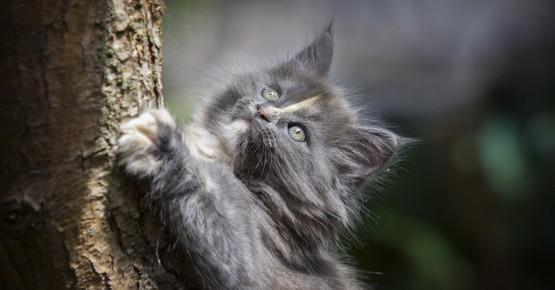 Драпаки для котів – правила вибору та рекомендації