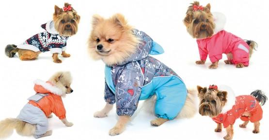 Коллекция зимней одежды для собак