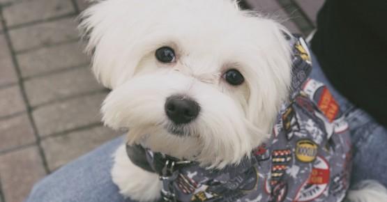 Одяг для собак: маркетинг чи необхідність?