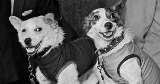 Як собаки космос підкорювали - річниця польоту Білки і Стрілки