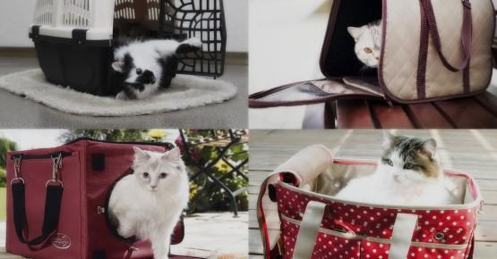 Як правильно обрати переноску для кота