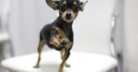 Вітаміни для собак та цуценят: які вітаміни потрібні вихованцеві?