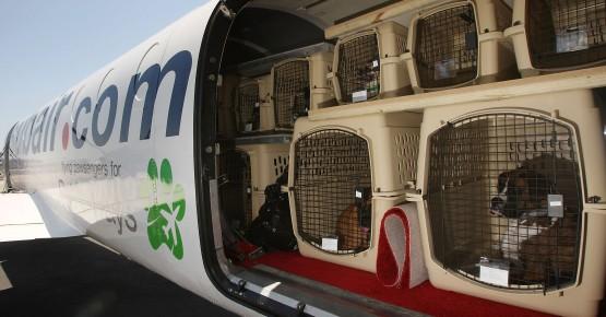 Правила перевезення тварин у літаку