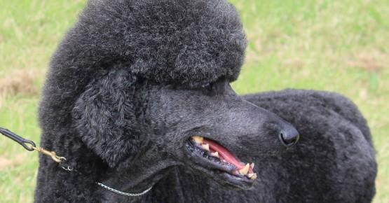 Грумінг для собак та котів: гігієнічний комплекс процедур  для здоров'я та краси