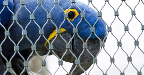Особливості вибору кліток для папуг