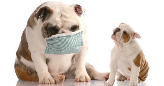 Все, що потрібно знати про харчову алергію у собак